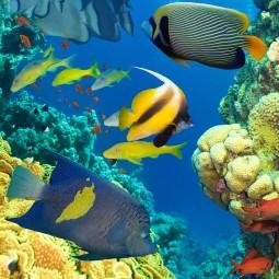 Мастер-класс«Подводный мир»