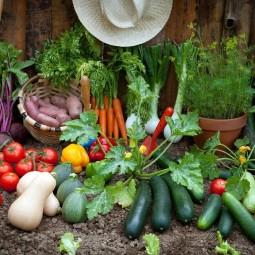 Фотоконкурс «Урожайные грядки»