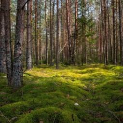 Эколого-краеведческая игровая программа «Лесные тайнички»