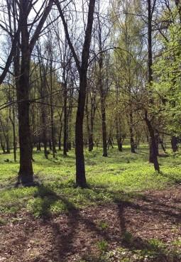 Щелковский городской парк культуры и отдыха