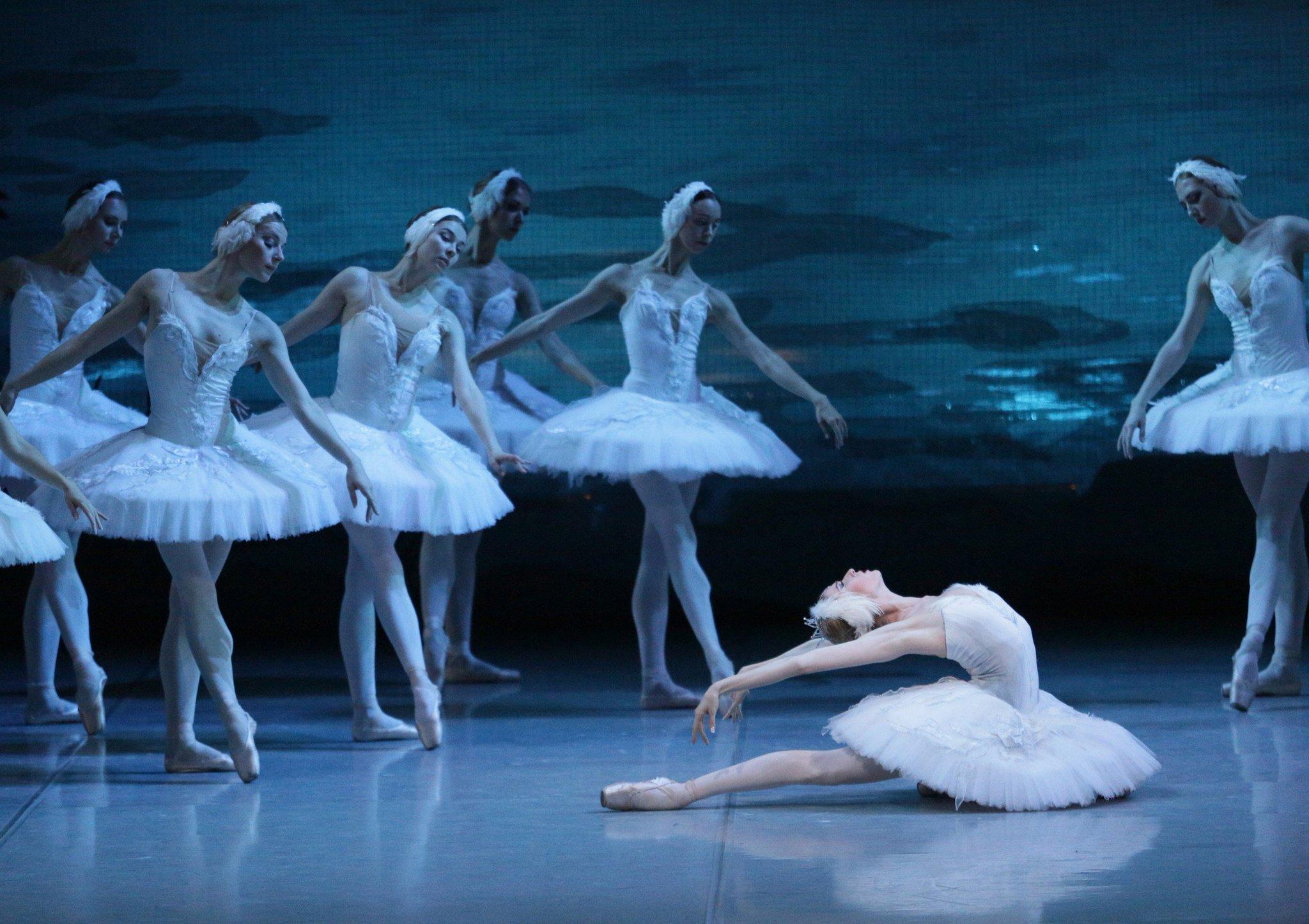 бросил учебу балет лебединое озеро в картинках отличительный питонов признак