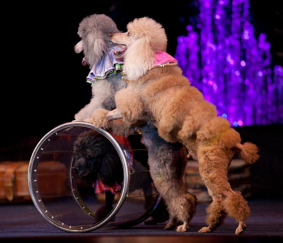 Фото собак в цирке