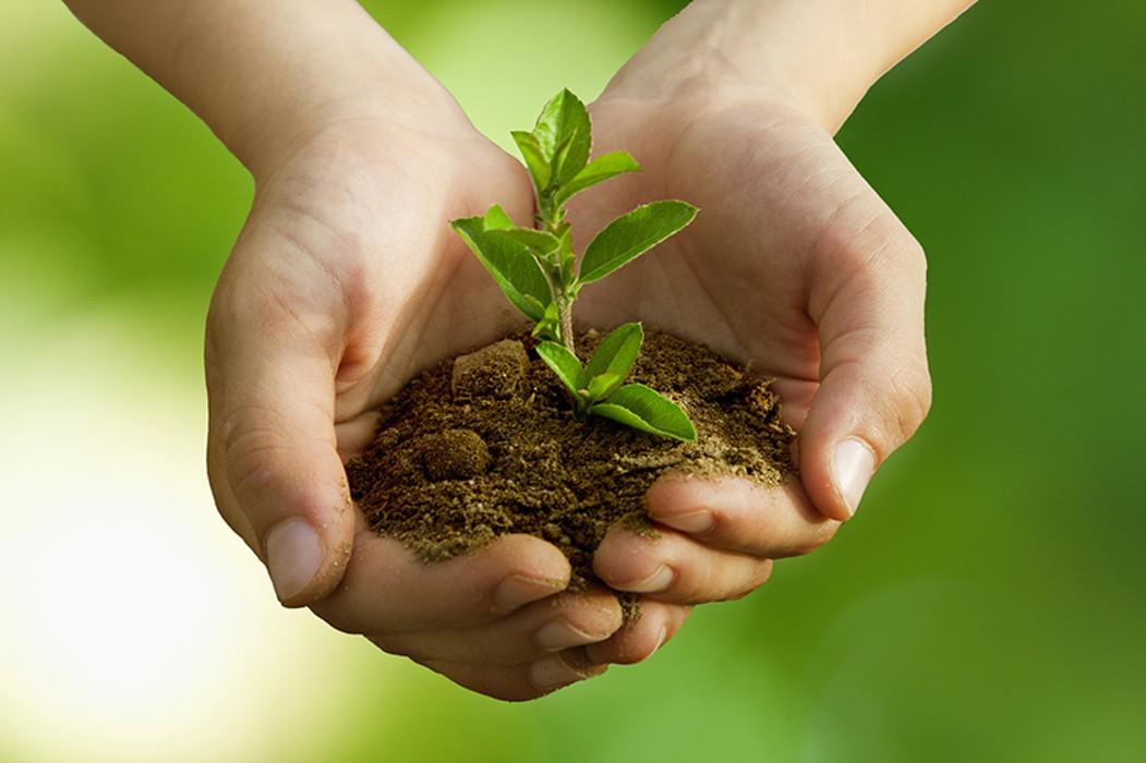 Картинки защитить растения